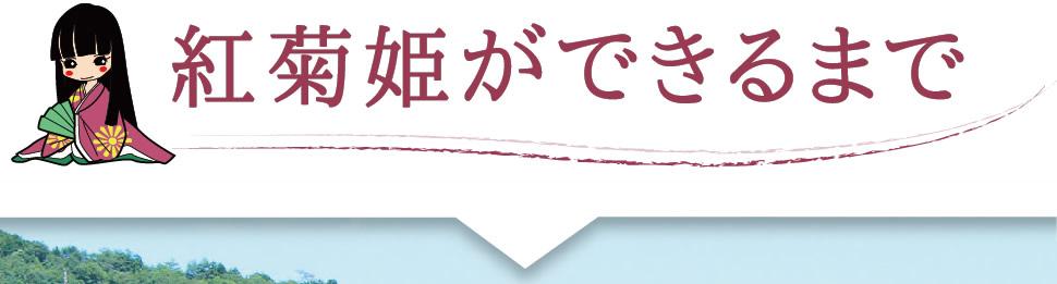 紅菊姫ができるまで