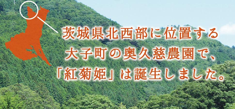 茨城県北西部に位置する大子町の奥久慈農園で、「紅菊姫」は誕生しました。